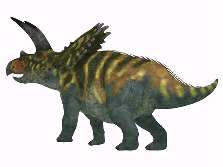 Coahuilaceratops Dinosaur Tail - Coahuilaceratops was a herbivorous Ceratopsian dinosaur that lived in Mexico during the Cretaceous Period.