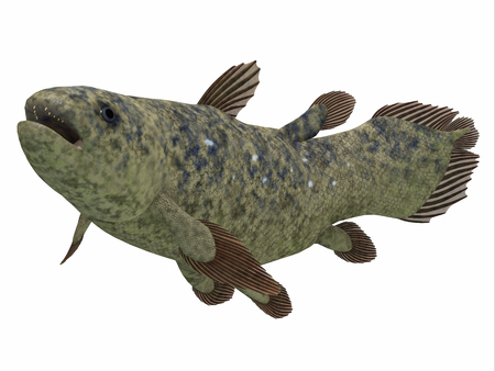Coelacanth Fish Side Profile - The Coelacanth fish was thought to be extinct but was found to be a still living species.