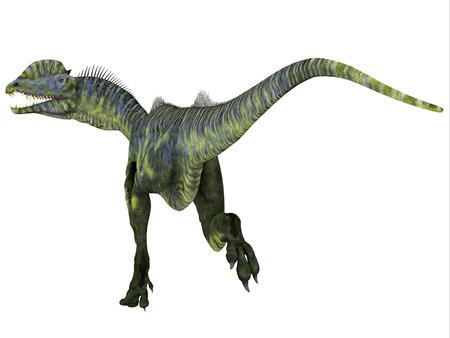 Dilophosaurus Dinosaur Tail - Dilophosaurus was a large carnivorous theropod dinosaur that lived in Arizona, USA during the Jurassic Period.