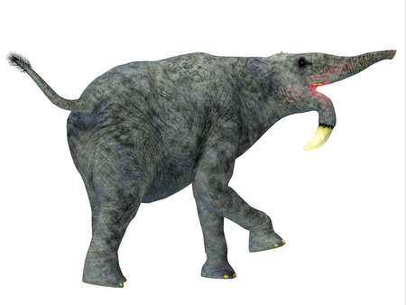 Deinotherium Mammal Tail - Deinotherium was an elephant mammal that lived in Asia, Africa and Europe during the Miocene and Pleistocene Period.
