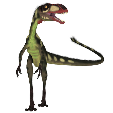 Dilong Dinosaur Front - Dilong was a carnivorous small theropod dinosaur that lived in China during the Cretaceous Period.