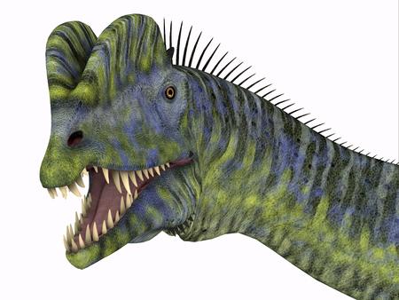 Dilophosaurus Dinosaur Head - Dilophosaurus was a large carnivorous theropod dinosaur that lived in Arizona, USA during the Jurassic Period.
