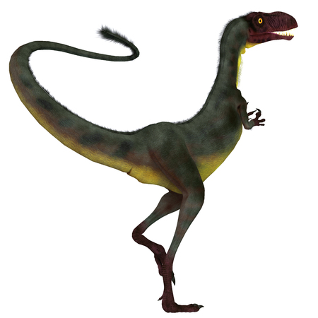 Dilong Dinosaur Tail - Dilong was a carnivorous small theropod dinosaur that lived in China during the Cretaceous Period.