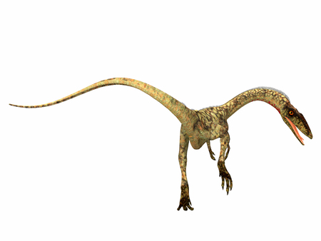 Coelophysis Dinosaur Tail - Coelophysis was a carnivorous theropod dinosaur that lived in the Triassic Period of North America.