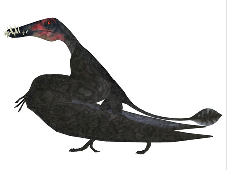 Dorygnathus Pterosaur Side Profile - Dorygnathus was a carnivorous Pterosaur reptile that lived in Europe during the Jurassic Period.