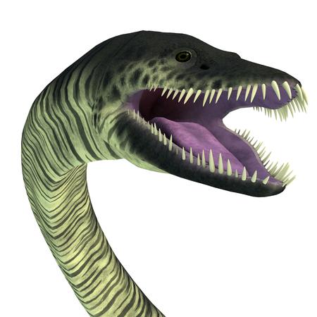 Elasmosaurus Reptile Head - Elasmosaurus was a marine reptile plesiosaur that lived in the seas of North America during the Cretaceous Period.