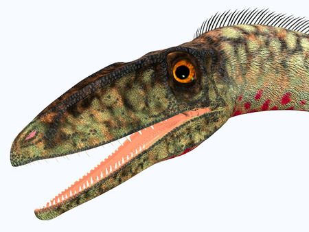 Coelophysis Dinosaur Head - Coelophysis was a carnivorous theropod dinosaur that lived in the Triassic Period of North America.