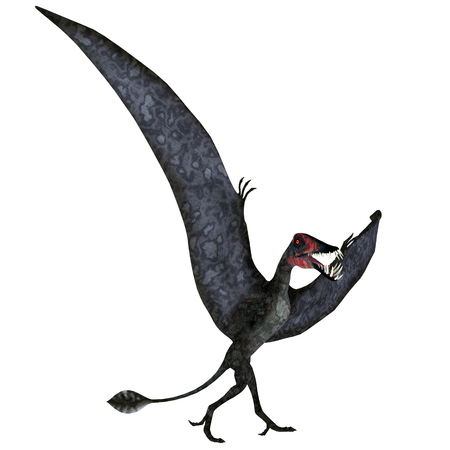 Dorygnathus Pterosaur on Ground - Dorygnathus was a carnivorous Pterosaur reptile that lived in Europe during the Jurassic Period.
