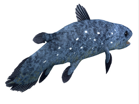 Coelacanth Fish Tail - The Coelacanth fish was thought to be extinct but was found to be a living species in present times.