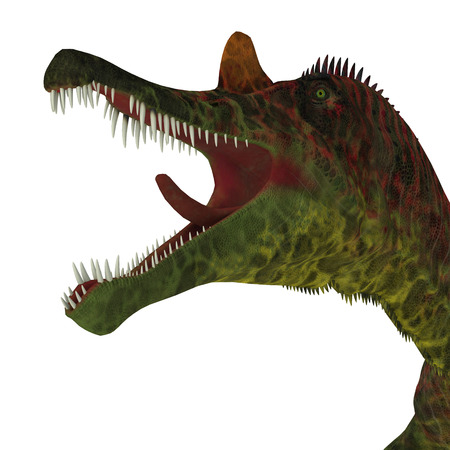 Ichthyovenator Dinosaur Jaws - Ichthyovenator was a carnivorous theropod dinosaur that lived in Laos, Asia during the Cretaceous Period.