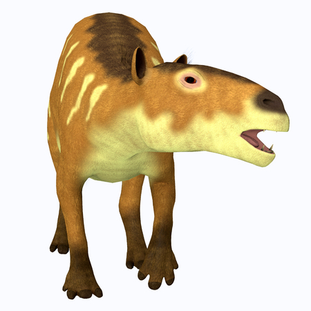 Eurohippus Horse Front Profile - Eurohippus was an early horse that lived in the Middle Eocene Period of Europe and Asia.