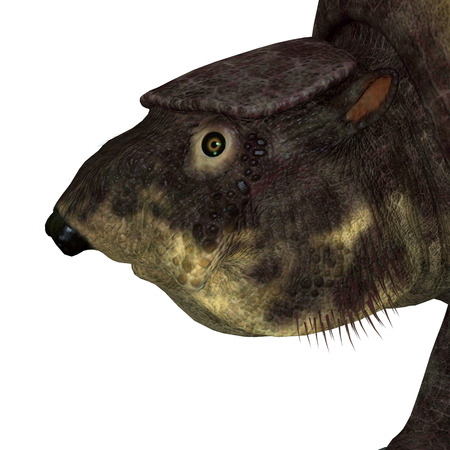 Glyptodont Mammal Head - Glyptodont was a herbivorous mammal that lived in North America during the Pleistocene Period. Stock fotó
