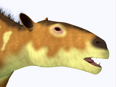 Eurohippus Horse Head - Eurohippus was an early horse that lived in the Middle Eocene Period of Europe and Asia. Stock Photo