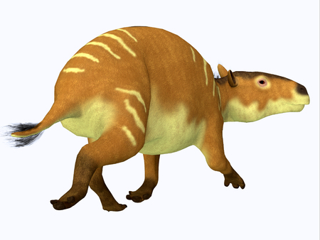 Eurohippus Horse Tail - Eurohippus was an early horse that lived in the Middle Eocene Period of Europe and Asia.