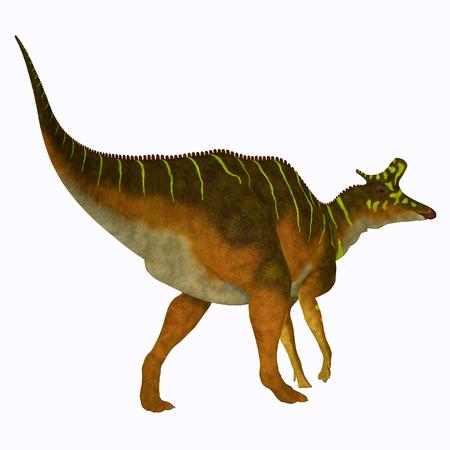 Lambeosaurus Dinosaur Tail - Lambeosaurus was a herbivorous Hadrosaur dinosaur that lived in North America during the Cretaceous Period. Stock Photo