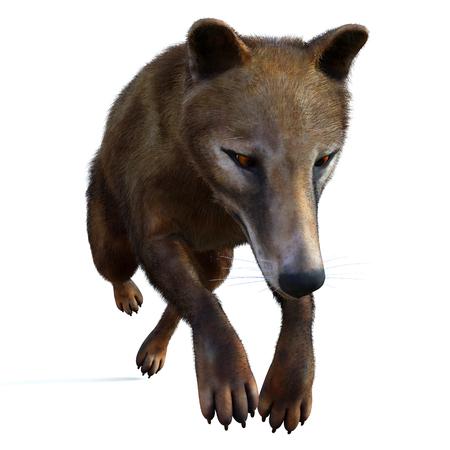 Thylacine Marsupial on White - The Thylacine marsupial was an extinct predator from the Holocene Period of Australia, Tasmania, and New Guinea. Stock fotó