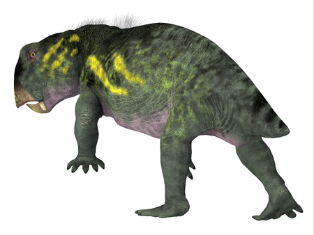 Lystrosaurus Dinosaur Tail - Lystrosaurus was a dicynodont therapsid herbivore dinosaur that lived in several countries during the Triassic and Permian Periods. Stock Photo
