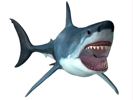 Megalodon Predator Shark - Megalodon was an enormous carnivorous shark that roamed the oceans of the Pleistocene Period. Stock Photo