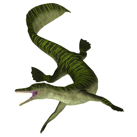 Mesosaurus Marine Reptile on White - Mesosaurus was a carnivorous marine reptile that lived in the seas of Africa and South America during the Permian Period.