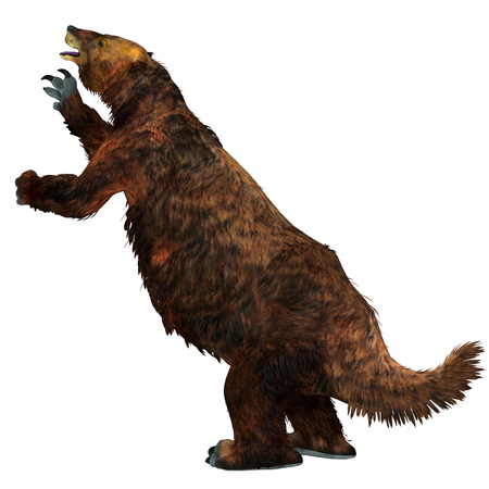 Megatherium Sloth Tail - Megatherium was a herbivorous Giant Ground Sloth that lived in Central and South America during the Pliocene and Pleistocene Periods. Stock Photo