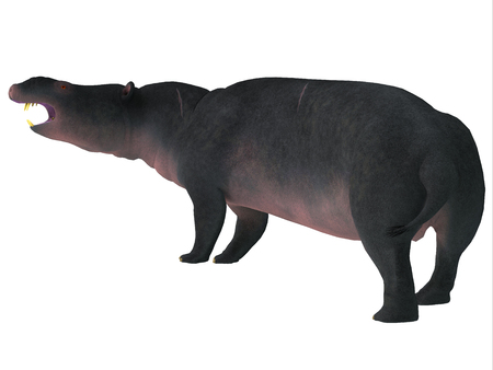 Moeritherium Mammal Tail - Moeritherium was a rotund semi-aquatic herbivorous mammal that lived in Egypt during the Eocene Period.