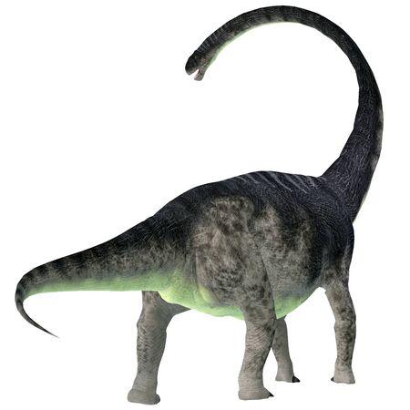 Omeisaurus Dinosaur Tail - Omeisaurus was a herbivorous sauropod dinosaur that lived in China during the Jurassic Period.