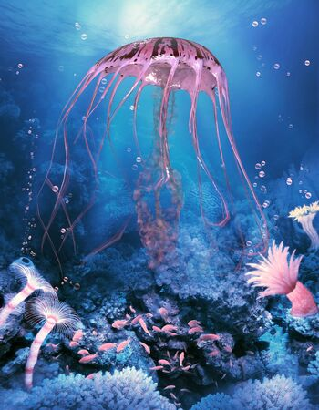 Compass Jellyfish - A Compass jellyfish is a common jellyfish found in temperate coastal ocean waters and has symmetrical markings on its bell. Imagens
