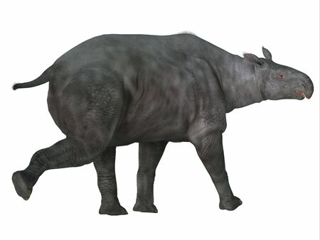 Paraceratherium Mammal Tail - Paraceratherium was a herbivorous mammal that lived in Eurasia during the Eocene and Oligocene Periods. 스톡 콘텐츠