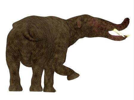 Platybelodon Mammal Tail - Platybelodon was herbivorous elephant mammal that lived in Africa, Europe and North America during the Miocene and Pleistocene Periods.