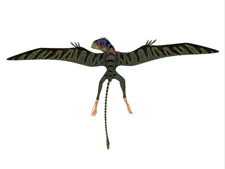 Peteinosaurus Reptile Wings Spread - Peteinosaurus was a carnivorous flying pterosaur that lived in Italy during the Triassic Period.