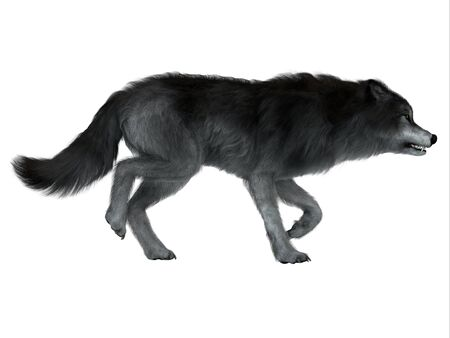 Dire Wolf Side Profile - The carnivorous Dire Wolf lived in North and South America during the Pleistocene Period.