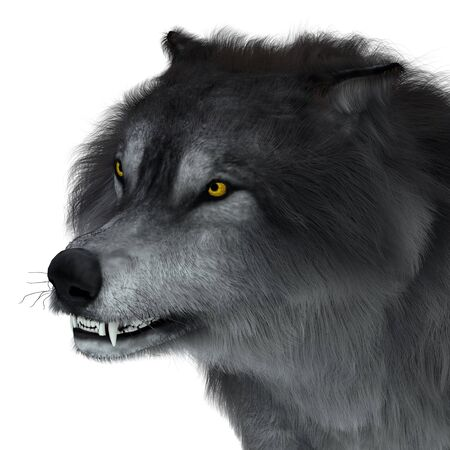 Dire Wolf Head - The carnivorous Dire Wolf lived in North and South America during the Pleistocene Period.