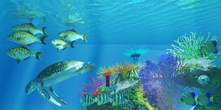 Green Sea Turtle - A Green Sea Turtle dives for deeper water as Chelmon Butterflyfish, Rubberlip Seaperch, Regal Angelfish swim nearby.