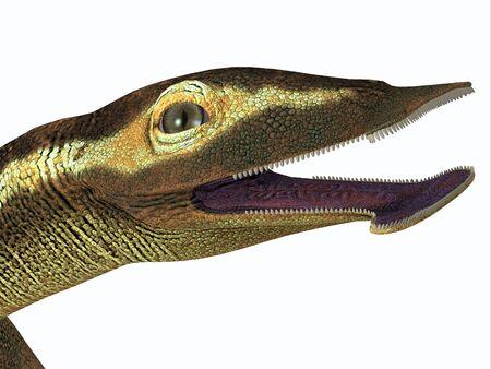 Atopodentatus Marine Reptile Head - Atopodentatus was a herbivorous semi-aquatic marine reptile that lived in Triassic Seas of China. Фото со стока
