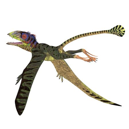 Peteinosaurus Reptile Tail - Peteinosaurus was a carnivorous flying pterosaur that lived in Italy during the Triassic Period.