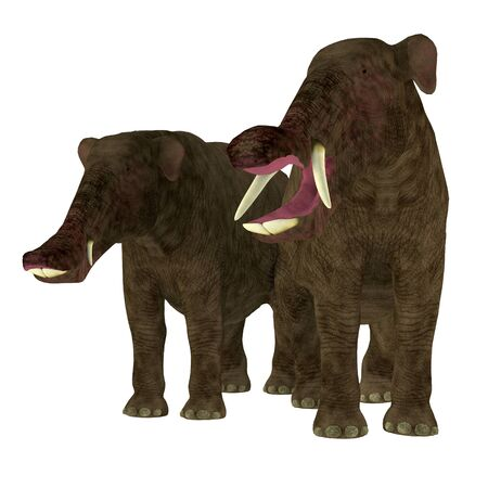 Platybelodon Male and Female - Platybelodon was herbivorous elephant mammal that lived in Africa, Europe and North America during the Miocene and Pleistocene Periods.