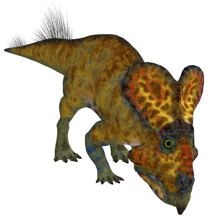 Protoceratops was a herbivorous Ceratopsian dinosaur that lived in Mongolia during the Cretaceous Period.