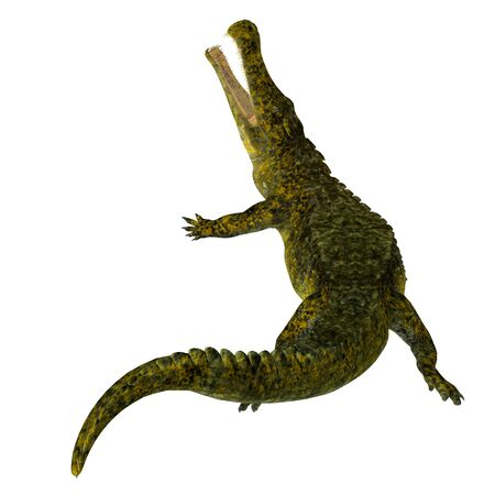 Sarcosuchus was a carnivorous aquatic crocodile that lived in Africa during the Cretaceous Period.