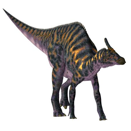 Saurolophus osborni was a Hadrosaur herbivorous dinosaur that lived in Asia and North America during the Cretaceous Period. Imagens