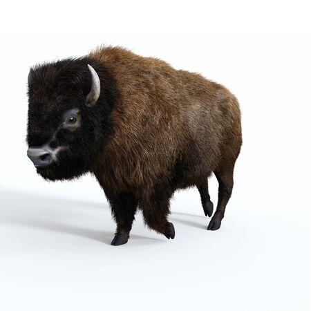 Macho de bisonte americano: el bisonte toro americano es un herbívoro que es una especie de megafauna de los Estados Unidos y Canadá. Foto de archivo