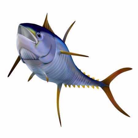The Yellowfin tuna is a fast swimming predator that is found in worldwide oceans in large schools.
