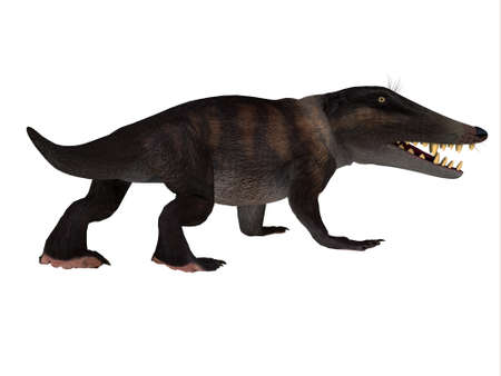 Ambulocetus Walking Whale - Ambulocetus was the primitive otter-like ancestor of the whale and lived in Pakistan and India during the Eocene Period. Reklamní fotografie