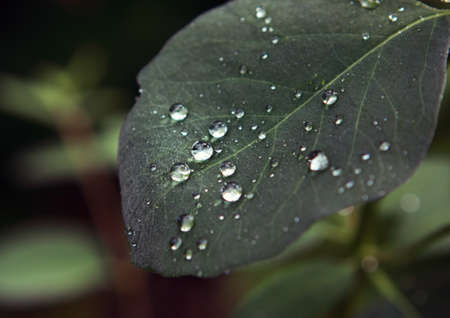 tree leaf with raindrops close up