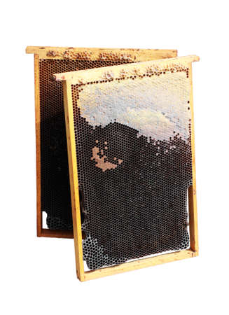 honey comb in two wooden frames isolated on white photo