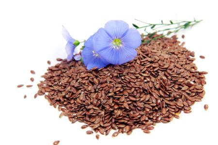 linseed:  Linum usitatissimum  beautiful flowers and seeds on white Stock Photo