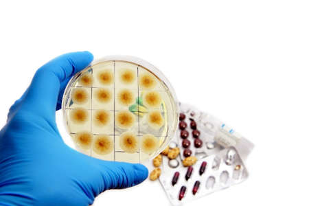 arm in glove with fungi on the plate and medicins on the background Stock Photo