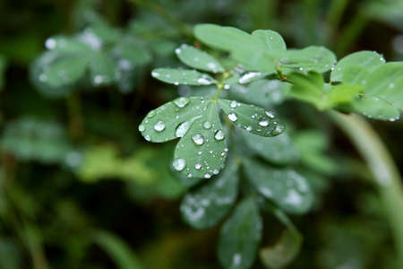 freshment: green leaf with clear raindrops
