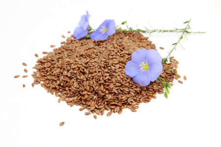 linum: flowers and seeds of linum (flax) over white Stock Photo