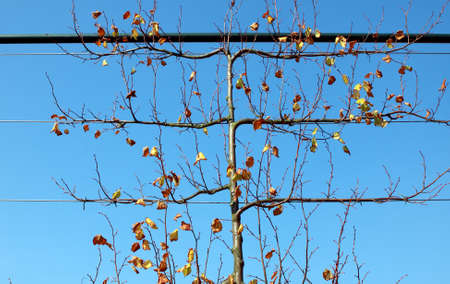 season specific: untypical shape autumn tree over blue sky