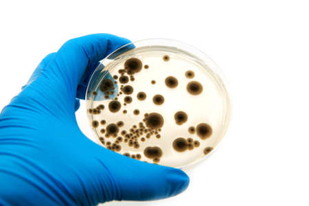microbiological agar plate with fungi on white background